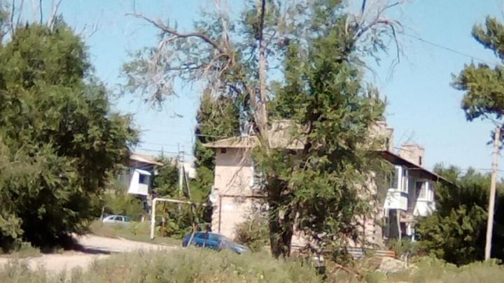 «Чиновники ждут, когда кого-то из нас задавит?» Волгоградцы требуют очистить город от мертвых деревьев