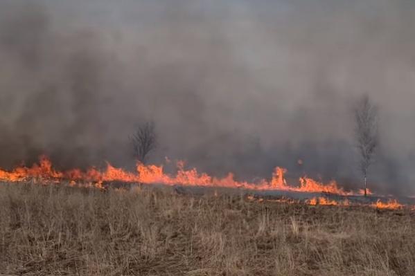 За 1,5 часа огонь в поле увеличился в разы и перекинулся на соседние перелески
