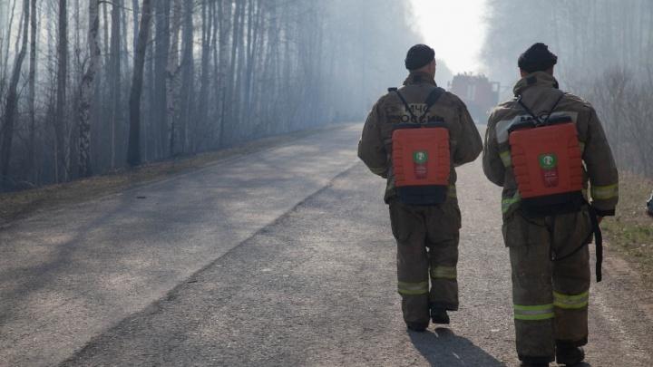 Спасают лес и борются с огнем: сколько в Тюменской области платят пожарным, егерям и лесникам