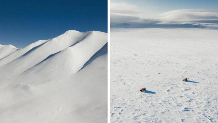 Новосибирский фотограф снял снежную пустыню Чукотки свысоты— отбелых просторов режет глаза