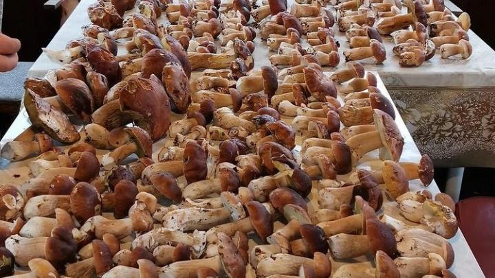 «Пошли грибы»: нижегородцы поделились с NN.RU фотографиями улова из леса