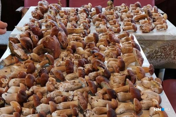 Нижегородка нашла 268 белых грибов