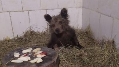 Найденную на границе Башкирии и Челябинской области медведицу спасли. Теперь ей подбирают кличку