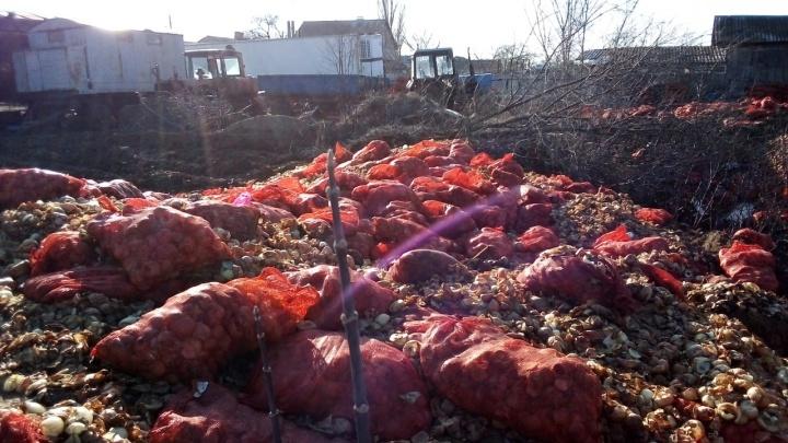 «Работники ломились в дом к жене и дочке»: под Волгоградом на дачном участке устроили лукомогильник