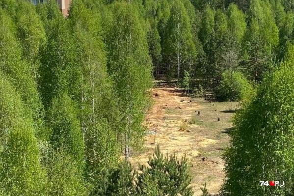 Деревья спилили в апреле под покровом ночи