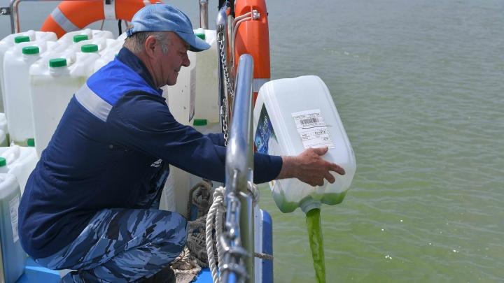Ростовская АЭС впервые провела экологическую реабилитацию реки Дон от размножения сине-зеленых водорослей