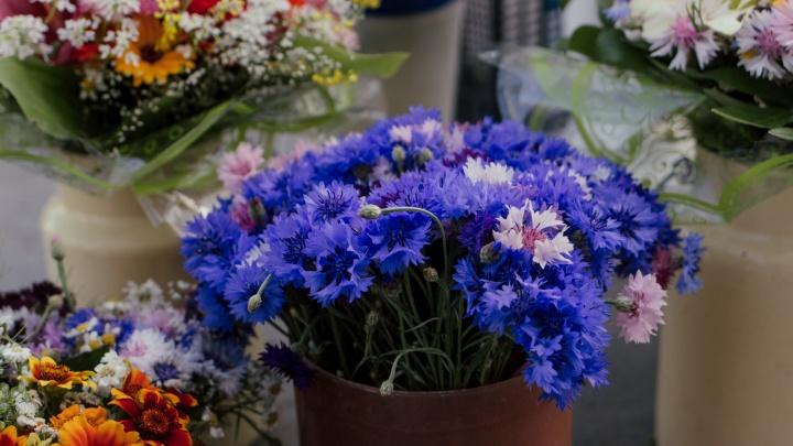 Мужчинам — дороже: сколько зарабатывают на продаже полевых и дачных цветов (фоторепортаж с улиц)