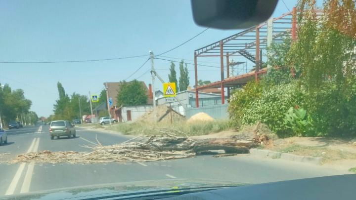 Чудом никого не задело: в Ворошиловском районе Волгограда упавшее дерево перегородило дорогу