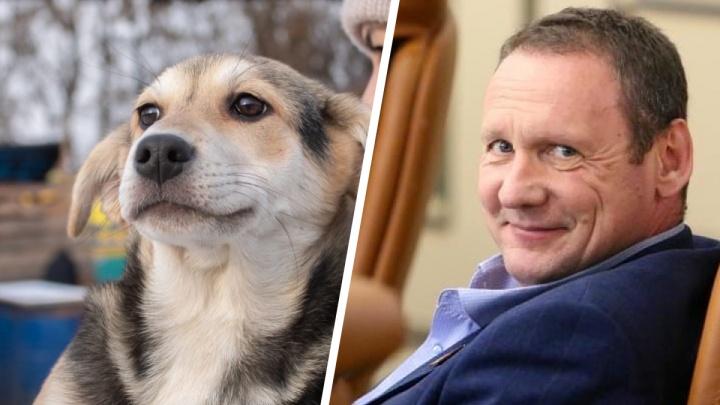 «Пиар-акция по сбору денег»: депутат обвинил руководство приюта для животных в шантаже чувствами людей