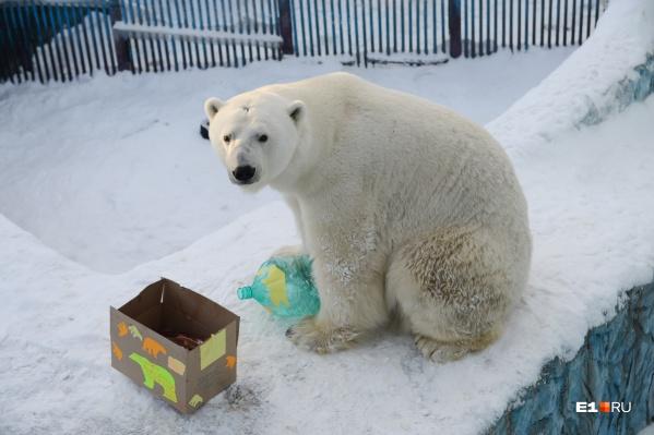 Белый медведь Умка жил в Екатеринбургском зоопарке с 1998 года