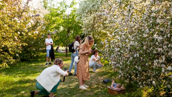 Где устроить фотосессию в цветущих яблонях? Список лучших мест в Тюмени