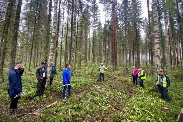 В «Титане» считают: при отсутствии грамотного ухода за молодняками лесовосстановление будет бесполезным