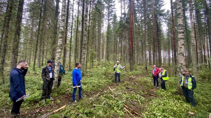 Рубить, чтобы сохранить: лесопромышленники показали, как спасают молодняк в Поморье