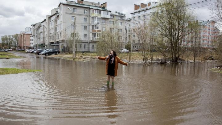 «Она уже рассасывается»: в Ярославле на затопленном стадионе поселились утки