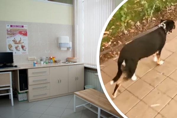 Протезы пришлось заменить, потому что собака Дея сгрызла первую пару