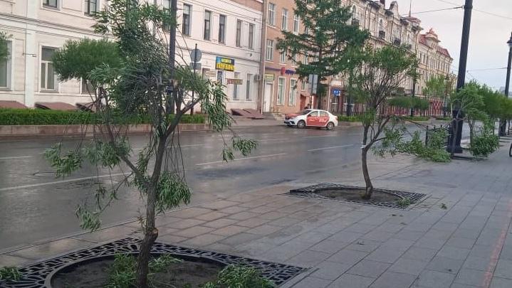 Появилось видео с девушкой-вандалом, разломавшей шаровидные ивы на Ленина
