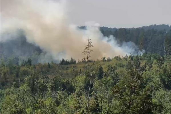 Тольяттинцы назвали лесной пожар повторением трагедии 2010 года, когда лес в зеленой зоне практически полностью выгорел