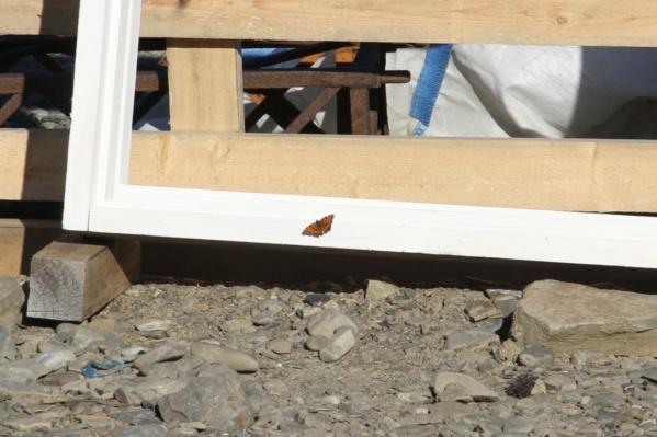 До бабочек на Новой Земле уже встречали моль, но скорее всего ее занесло туда вместе с исследователями