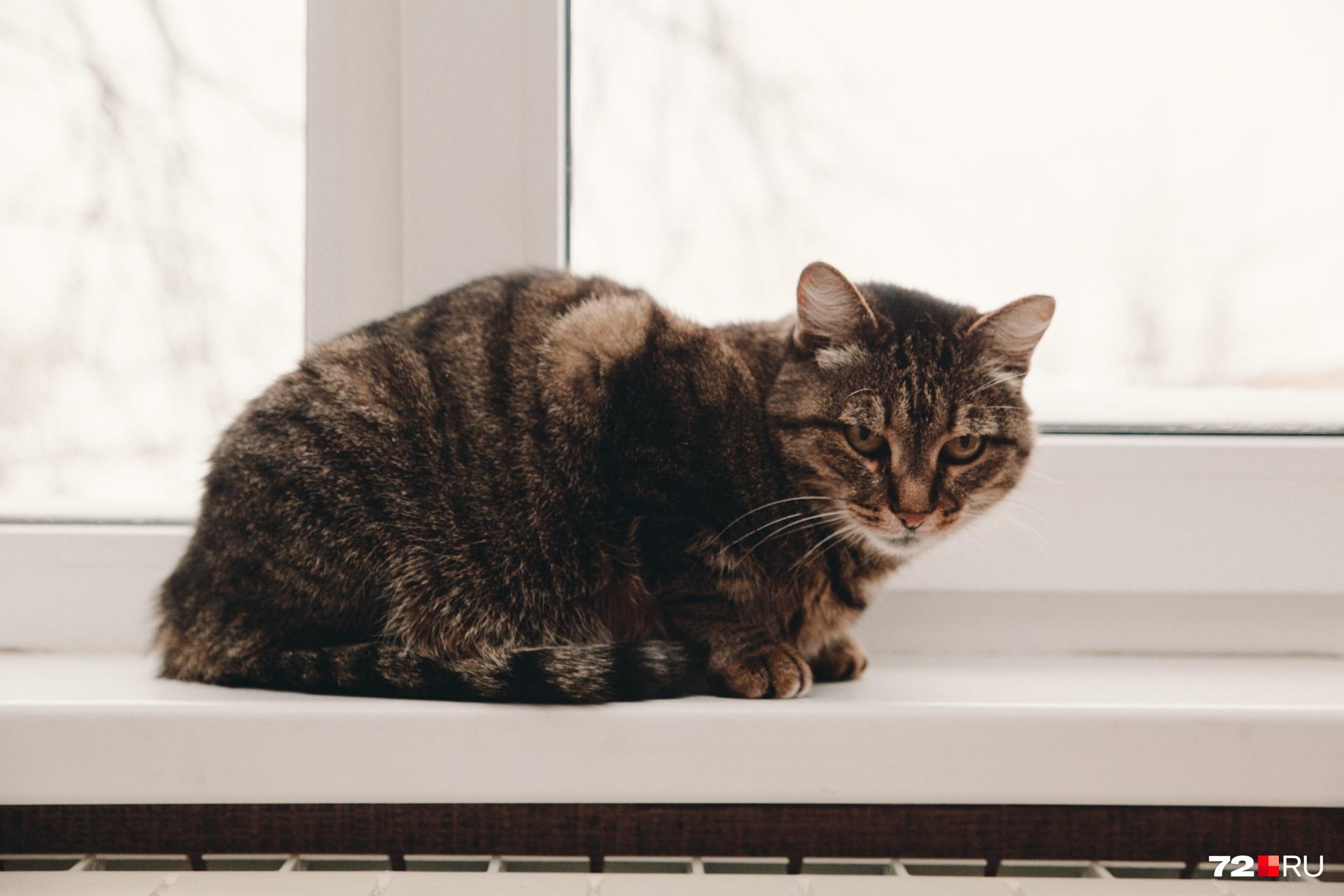 Кошка немного в шоке, что в дом пришло столько гостей