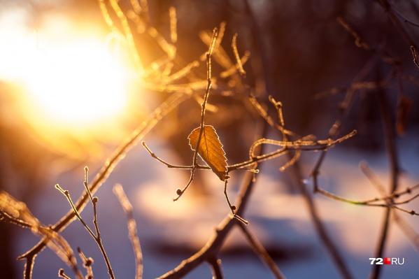 Последние дни января порадуют жителей города теплом и отсутствием осадков