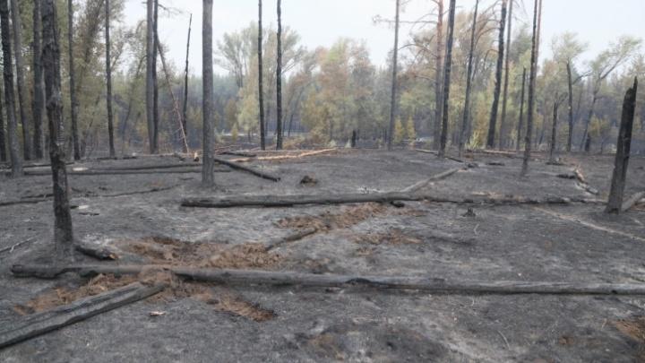 Названа причина крупного лесного пожара в Тольятти