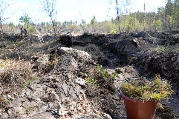 Высадку леса провели на территории по направлению к федеральной трассе «Иртыш»
