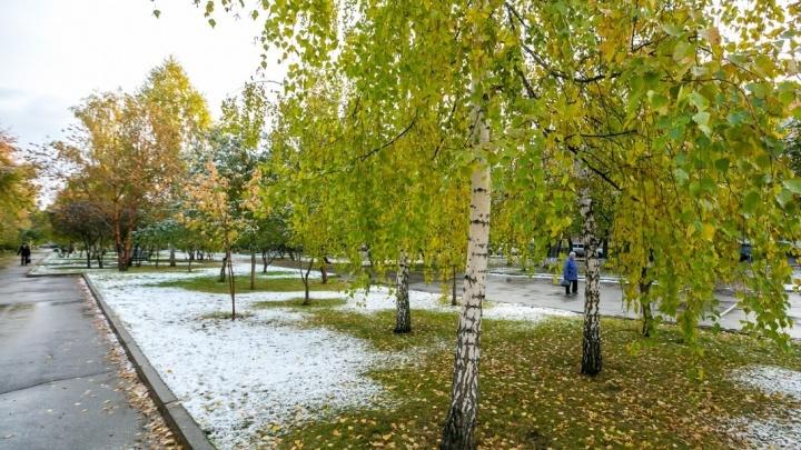 Первые заморозки в Красноярске обещают в начале следующей недели