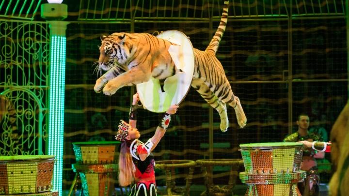 Новый сезон в Самарском цирке: что покажут на арене в феврале