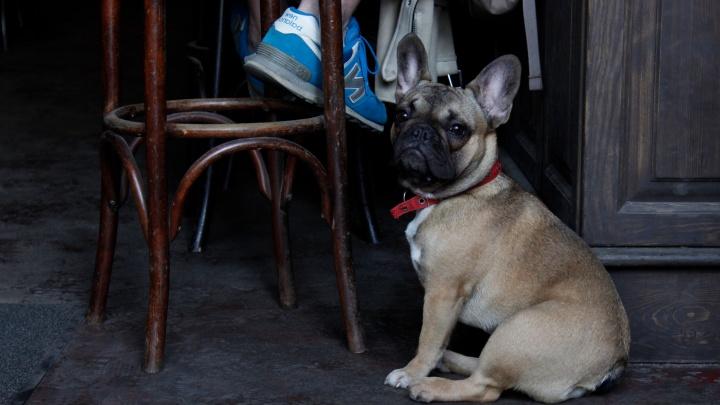 Новосибирск оказался среди городов— лидеров по числу ресторанов и кафе, куда можно прийти с собакой