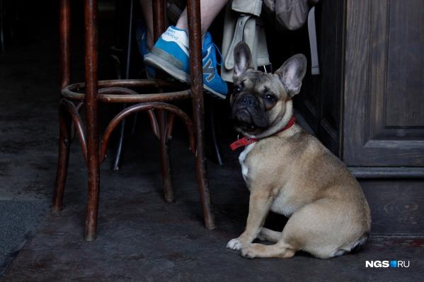Собака в зале уже не удивляет посетителей новосибирских кофеен и баров