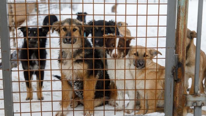 В Волжском потратят больше миллиона на отлов 95 бродячих собак