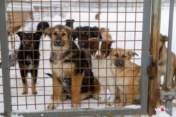 С начала года от бездомных животных уже пострадали почти 800 человек