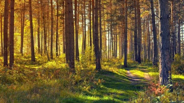Рубль с каждой упаковки: Zewa и «Пятёрочка» помогут восстановить леса