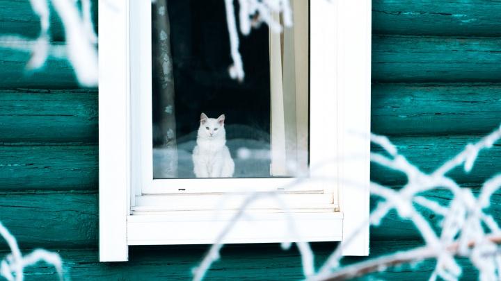 В самое мурчало: подборка хозяев улиц ко Дню кошек
