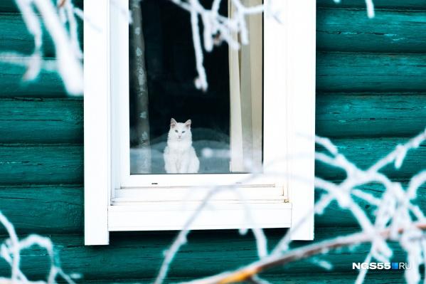 Говорят, что коты — перфекционисты по натуре. Глядя на это фото, поневоле соглашаешься
