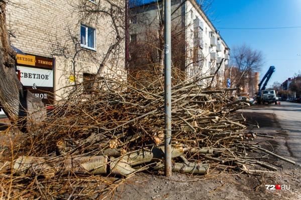 Обрезку и вырубку деревьев в Тюмени проводят ежегодно