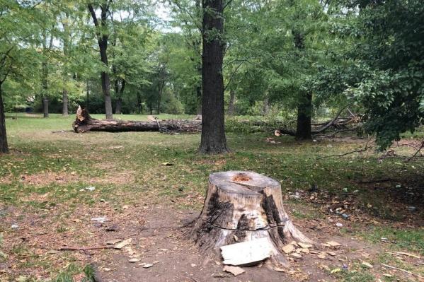 Два года назад в парке начали благоустройство со спила многолетних деревьев