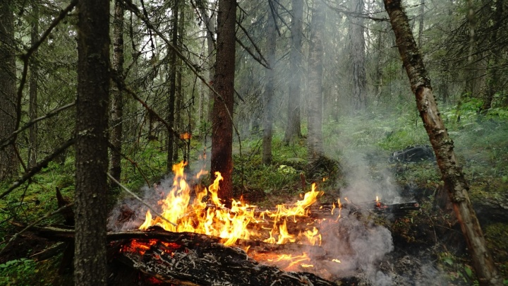 На Урале опять загорелся заповедник «Денежкин Камень»