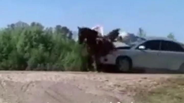 Стали известны подробности ДТП в Башкирии, в котором машина влетела в повозку с пятью людьми