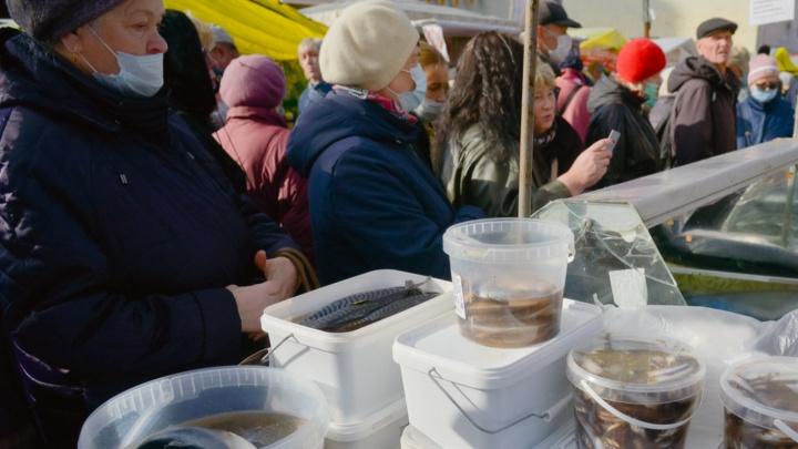 От окуня до семги: что продают на рыбном базаре Маргаритинки — фото и цены