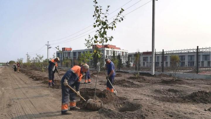 На Красном Пути и проспекте Мира планируют высадить тысячу яблонь и ясеней