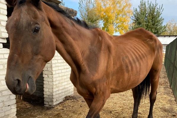 Курганцы обратили внимание на состояние лошадей в научной базе КГСХА