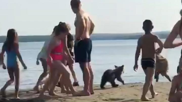 В Челябинской области медведя привели купаться на забитый людьми пляж