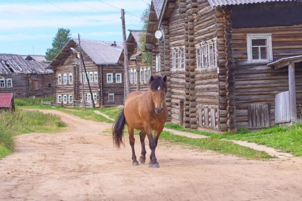 В одной из самых красивых деревень России есть старинные дома, церкви, мельницы и дружелюбный конь, гуляющий по улицам