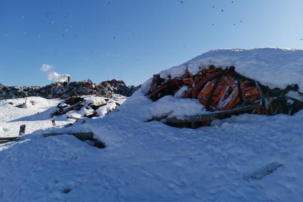 Кучи мусора на северодвинском полигоне припорошены снегом. Он растает, и с водой вредные вещества попадут в почву и грунтовые воды