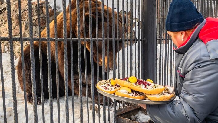 В «Роевом ручье» проснулись медведи: для них приготовили особое лакомство