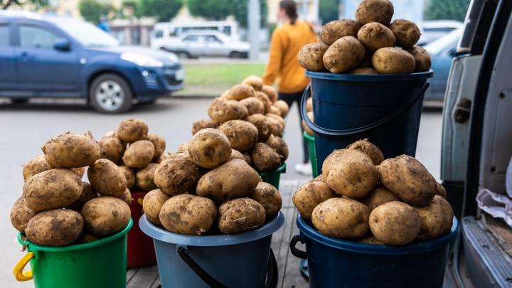 Не только жареха: три простых блюда из молодой картошечки от красноярских поваров