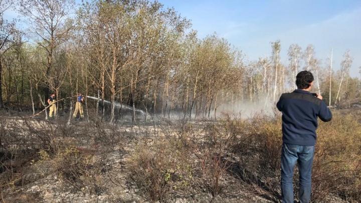 В Башкирии горит 2093 гектара леса