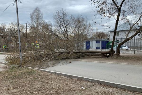 Одно из последствий — на пересечении улиц Дениса Давыдова и Нефтяников упало дерево