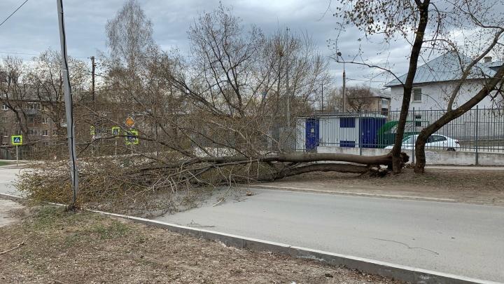 Мэр Перми поручил главам районов ликвидировать последствия урагана